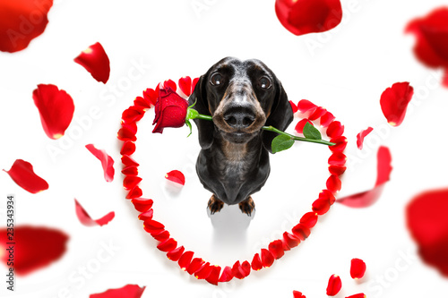 Keuken foto achterwand Crazy dog valentines dog in love