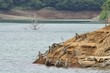 湖に現れた枯れ木