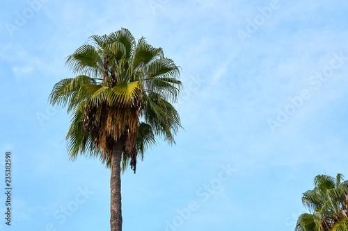 Foto op Plexiglas Palm boom A palm tree against a blue cloudy sky. Copy space.