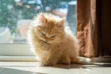 Cute Kitten In Morning