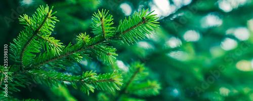 Fototapeta Green fir tree winter christmas background. Branches texture. Forest nature obraz na płótnie