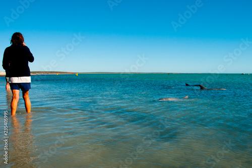 Photo  Wild Dolphins - Monkey Mia - Australia
