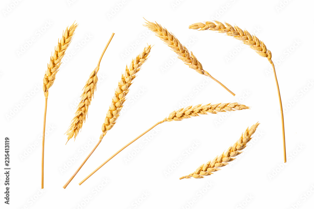 Fototapety, obrazy: Wheat ears isolated on a white background