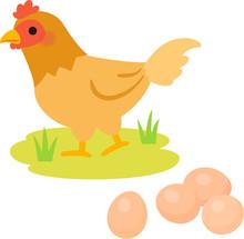 放し飼いの鶏と卵