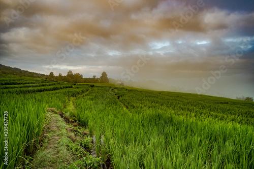 Poster Rijstvelden Green Terraced Rice Field in Chiangmai, Thailand