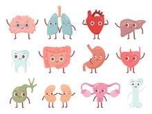 Healthy Biological Organ. Smil...