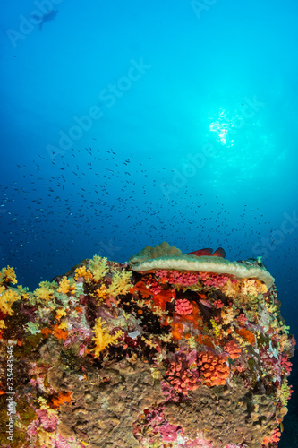 Fototapety, obrazy: Brightly colored hard and soft corals on a tropical coral reef at Koh Bon island, Thailand