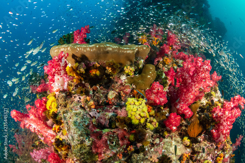 Fototapety, obrazy: Beautiful, colorful tropical coral reef at the Surin Islands (Richelieu Rock)