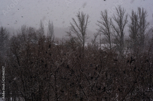 Tuinposter Donkergrijs Winter landscape - snow storm, snow covered trees and black birds