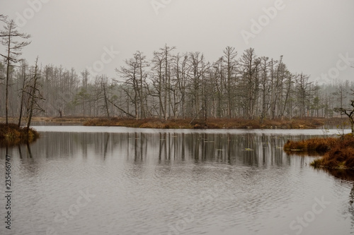 Tuinposter Donkergrijs swamp landscape view with dry pine trees, reflections in water and first snow