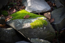 Moss-covered Stone. Beautiful Moss And Lichen Covered Stone. Bright Green Moss Background Textured In Nature. Natural Moss On Stones In Winter Forest.