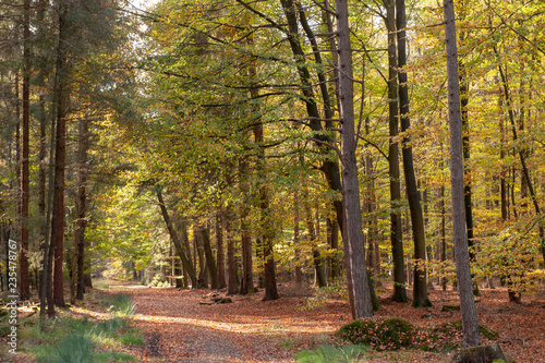 Papiers peints Foret brouillard Impression of the Forest near former prison and transit Camp Westerbork, on a sunny afternoon. Image from the Town of Hooghalen in the province of Drenthe, the Netherlands.