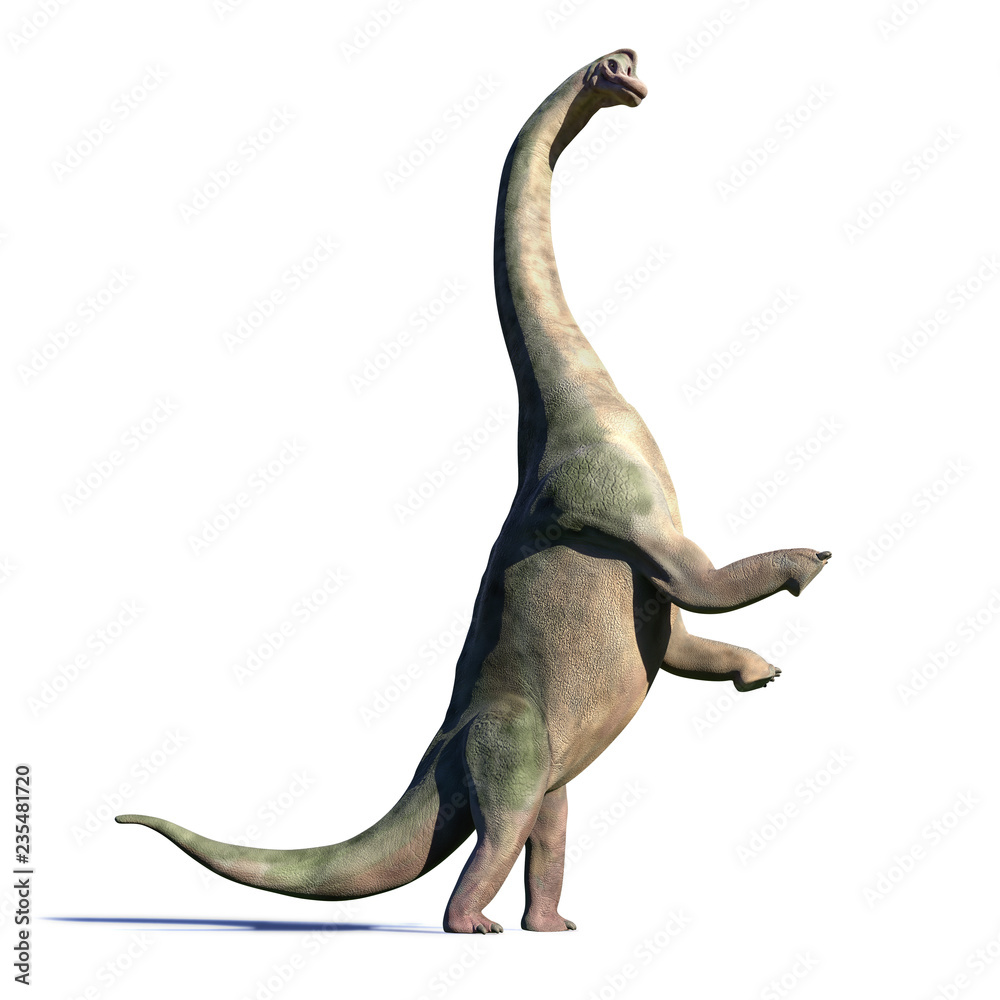 Brachiosaurus altithorax from the Late Jurassic in action (3d illustration isolated with shadow on white background)