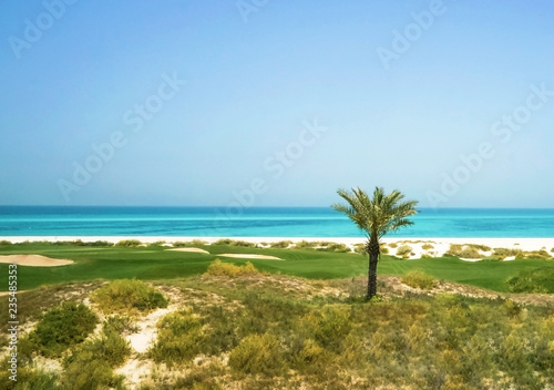 Palm tree on the Arabian Gulf. The Saadiyat Island. Abu Dhabi.
