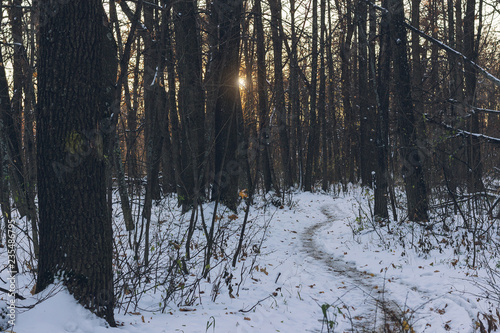 Fotografering  Mysterious forest at the evening after first snow