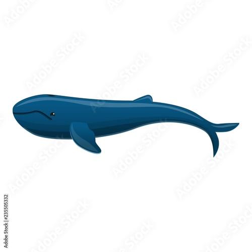 Fényképezés  Long whale icon
