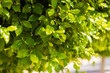 Closeup view of nature green leaf on blurred street background with copy space, using as background natural green plants landscape, ecology, fresh wallpaper concept