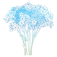 Vector Bouquet With Outline Forget Me Not Or Myosotis Flower Bunch, Bud And Leaf In Pastel Blue Isolated On White Background. Wildflower Forget Me Not In Contour Style For Spring Design.