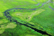 canvas print picture - Hippo hidden in green vegetation. Aerial landscape in Okavango delta, Botswana. Lakes and rivers, view from airplane. Green grass in South Africa. Trees with water in rainy season.