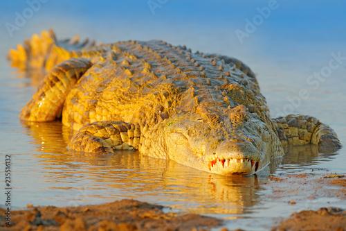Valokuva  Crocodile with beautiful evening light