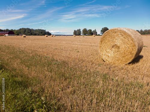 Foto op Aluminium Blauw Getreideernte am Vänern See bei Mariestad im Värmland in Schweden. Die Strohballen liegen auf den abgeernteten Feldern.