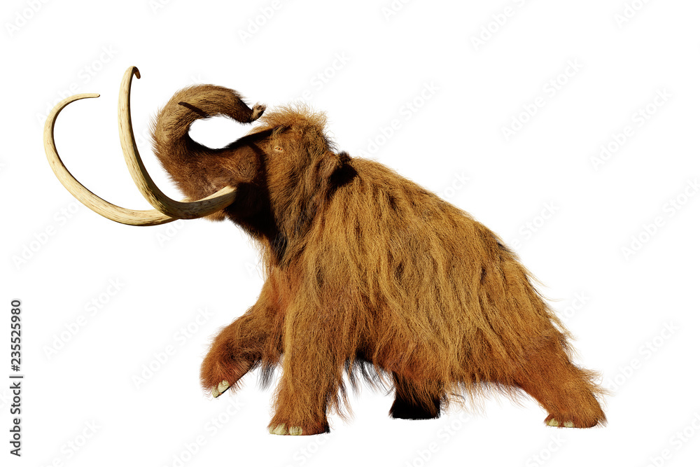 woolly mammoth, walking prehistoric mammal isolated on white background