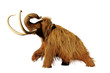 canvas print picture woolly mammoth, walking prehistoric mammal isolated on white background