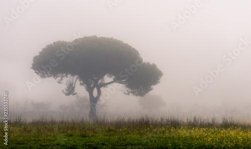 Obraz na plátně Manhã de nevoeiro