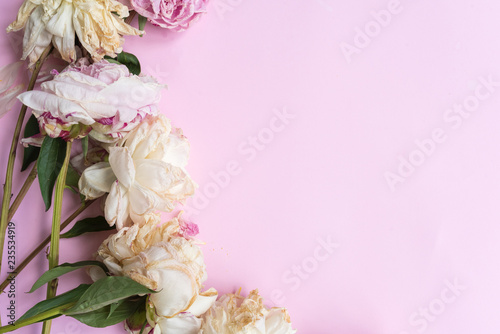 Cuadros en Lienzo Nature background - wilting pink and white peonies arranged on the side on pink