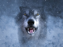 3D Rendering Of A Grey Wolf Growling In Snow.
