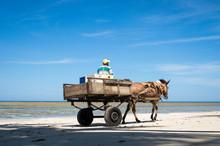 A Mule Pulls A Wooden Cart Along The Shore Of A Northeastern Beach In Brazil