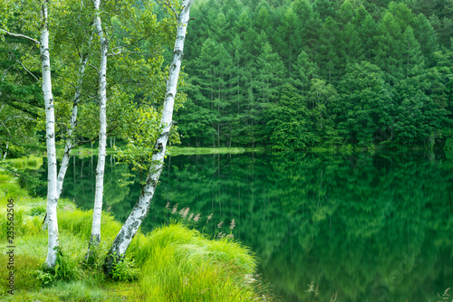 La pose en embrasure Bosquet de bouleaux 静かな森の中の湖畔 御射鹿池 日本長野県茅野市