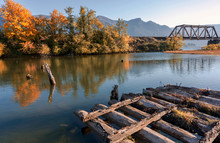 Wooden Frame Of The Old Pier In The Fall In The Bay Of The Columbia River