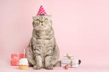 Funny Cat In A Cap Celebrates ...