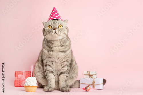 Obraz na plátne funny cat in a cap celebrates birthday, on a pink background