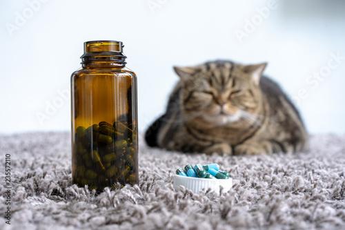 Valokuva  Sick  cat medicines for sick pills spilling out of bottle