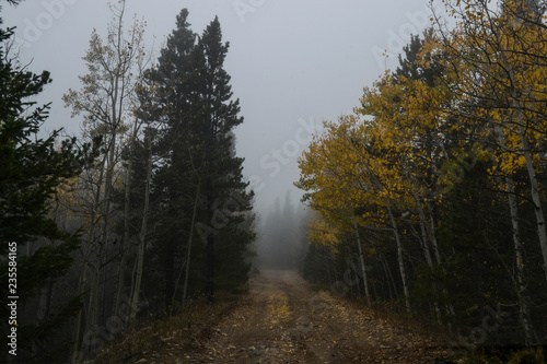 foggy road in the forest