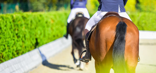 Beautiful girls on horses in jumping show, equestrian sports. Light-brown horses and girla in uniform going to jump. Hot, shiny day.