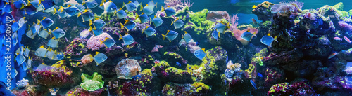 Foto auf AluDibond Riff Underwater world fish aquarium