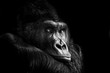 Leinwandbild Motiv Portrait of a Gorilla