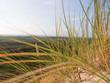Dünengräser im Herbst