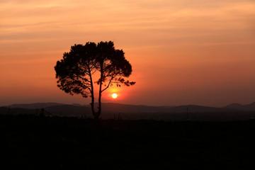 Alone tree sunset