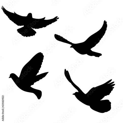 isolated, dove silhouette, flying flock of birds - Buy this