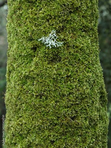 Fényképezés  Moss On Tree Trunk In Etna Park, Sicily