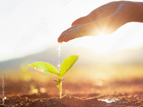 Poster Vegetal Hand nurturing and watering young baby plants growing in germination sequence on fertile soil at sunset background