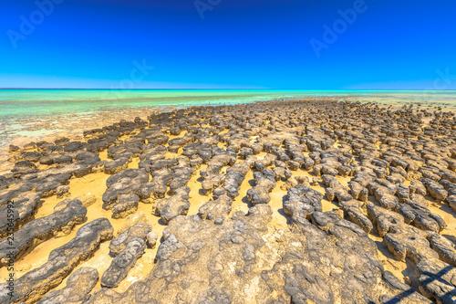 Foto op Plexiglas Oceanië Hamelin Pool Stromatolites, a protected Marine Nature Reserve in Shark Bay, Western Australia. Landscape with low tide in sunny day and blue sky. Horizon wallpaper.