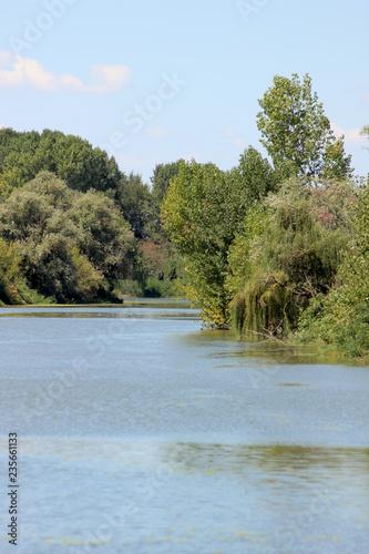 Photo Stands Roe Esplorare il fiume