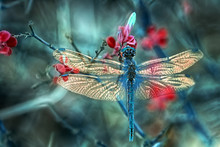 Beautiful Dragonfly Sitting On Flower In A Summer Garden
