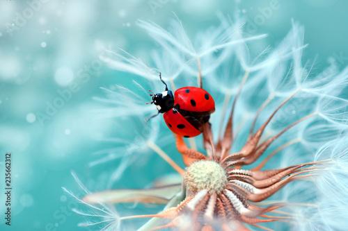 Poster Natuur Beautiful Ladybug sitting on flower in a summer garden