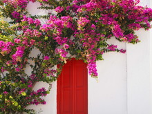 Red Door With Bougainvillea Fl...